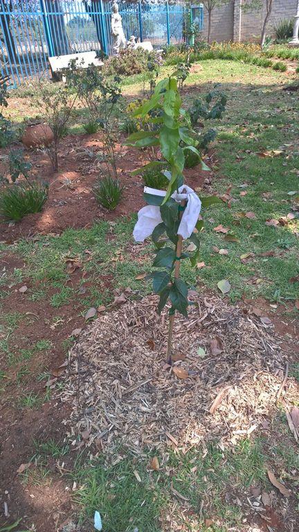 Arbor Month _42