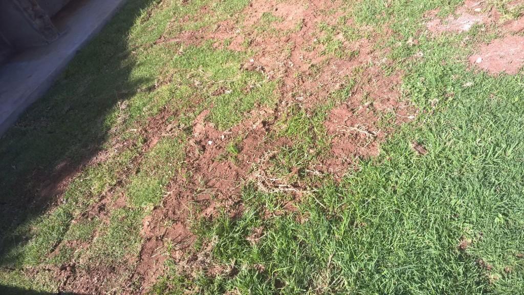 Grass removal