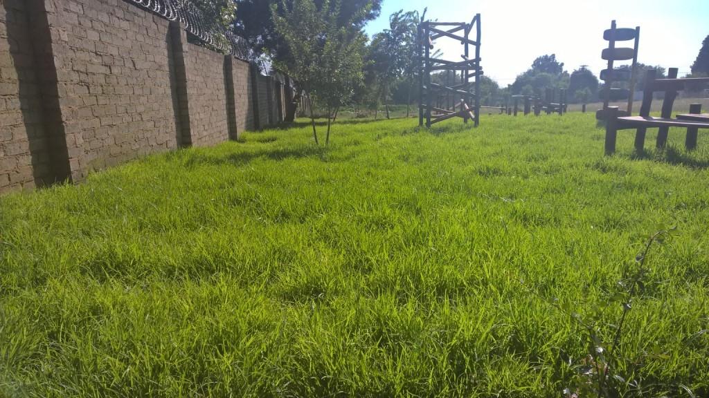 Grass removal_18