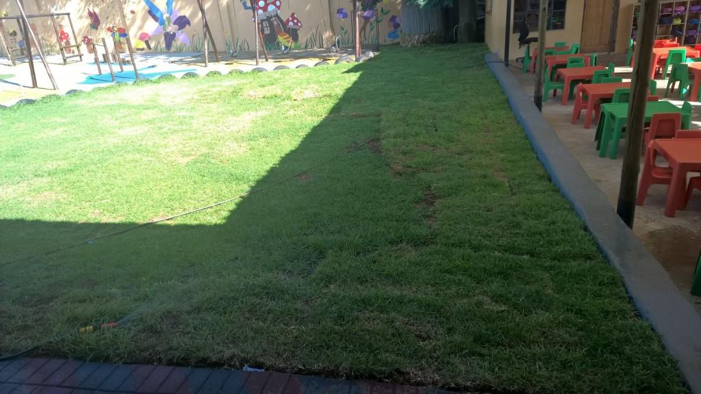 Grass removal_26