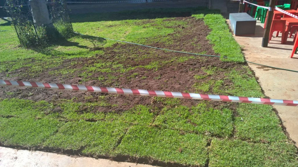 Grass removal_28