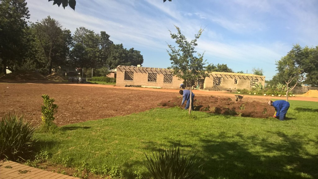 Grass removal_39