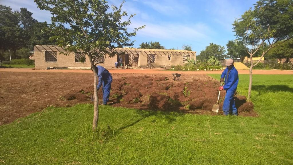 Grass removal_41
