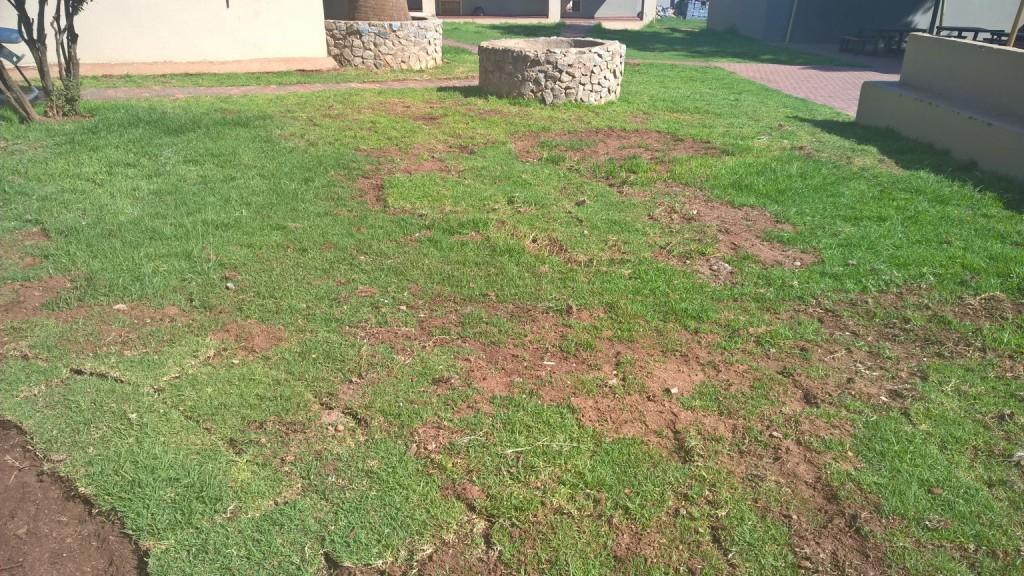 Grass removal_5