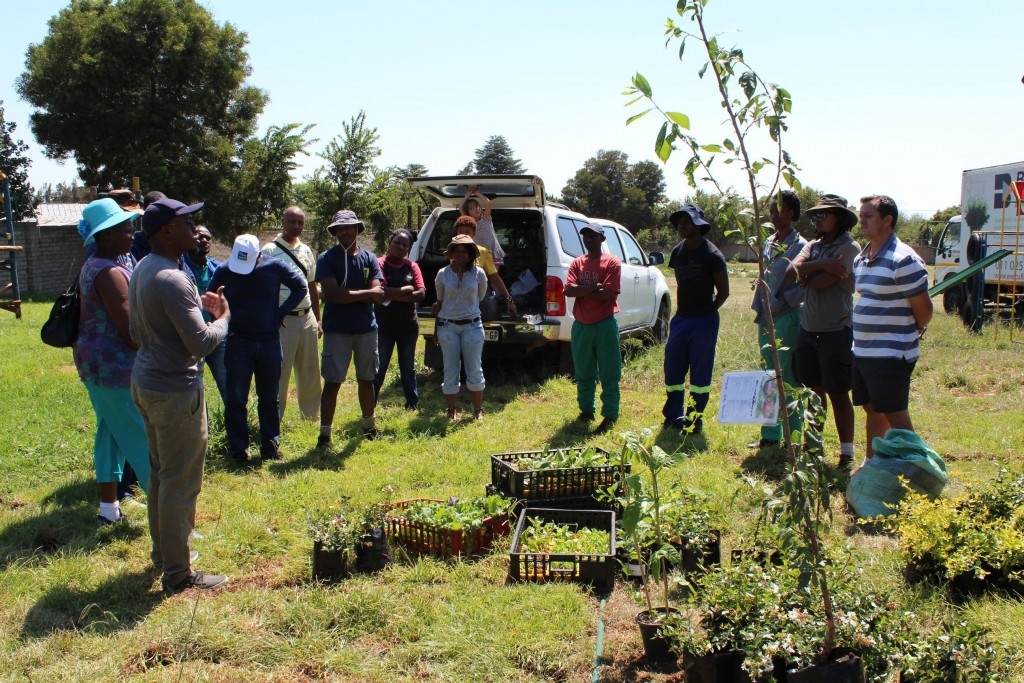 Horticultural Green Group_26